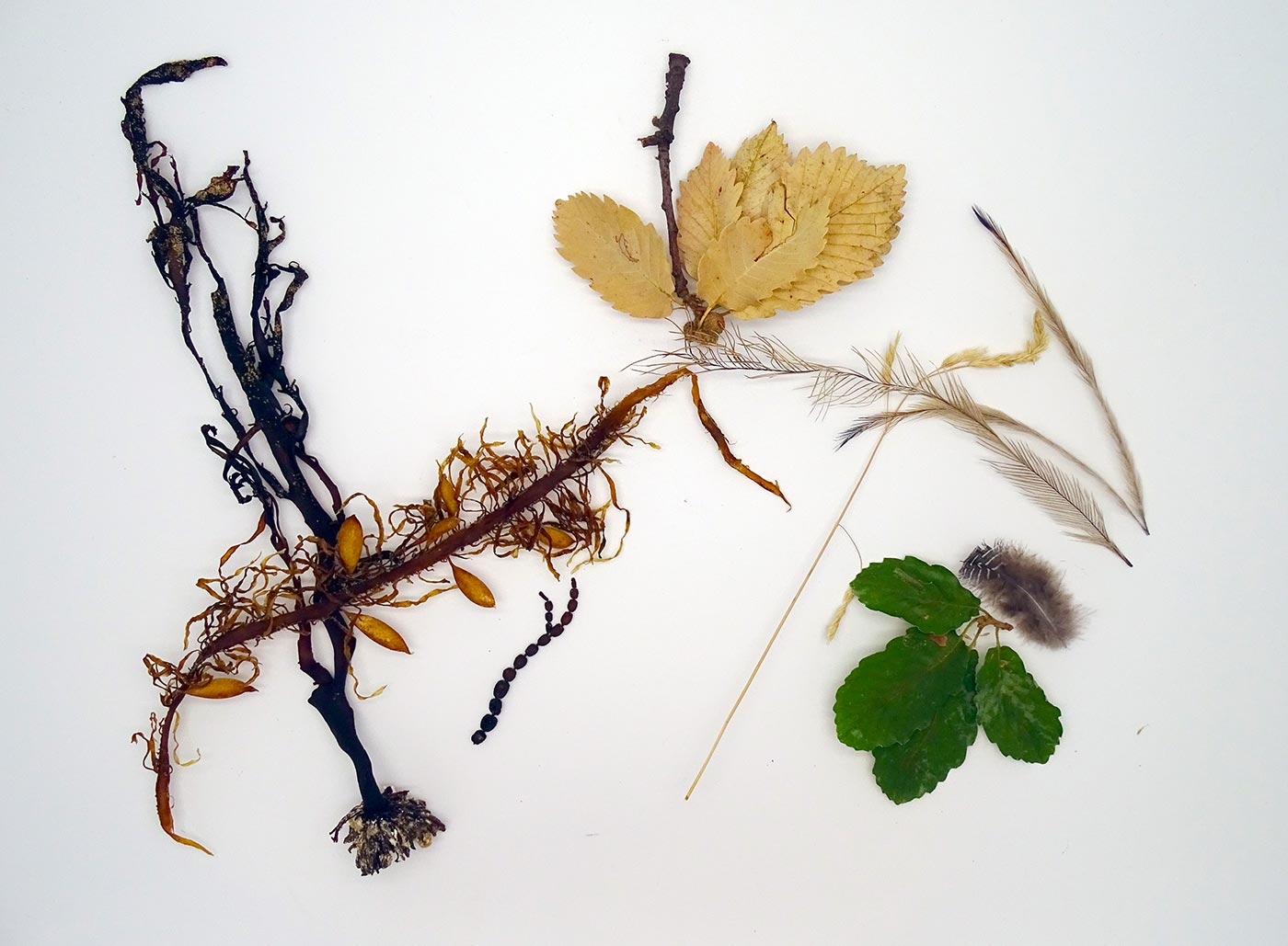 Arrangement of leaves, feathers and seaweed - click to view larger image