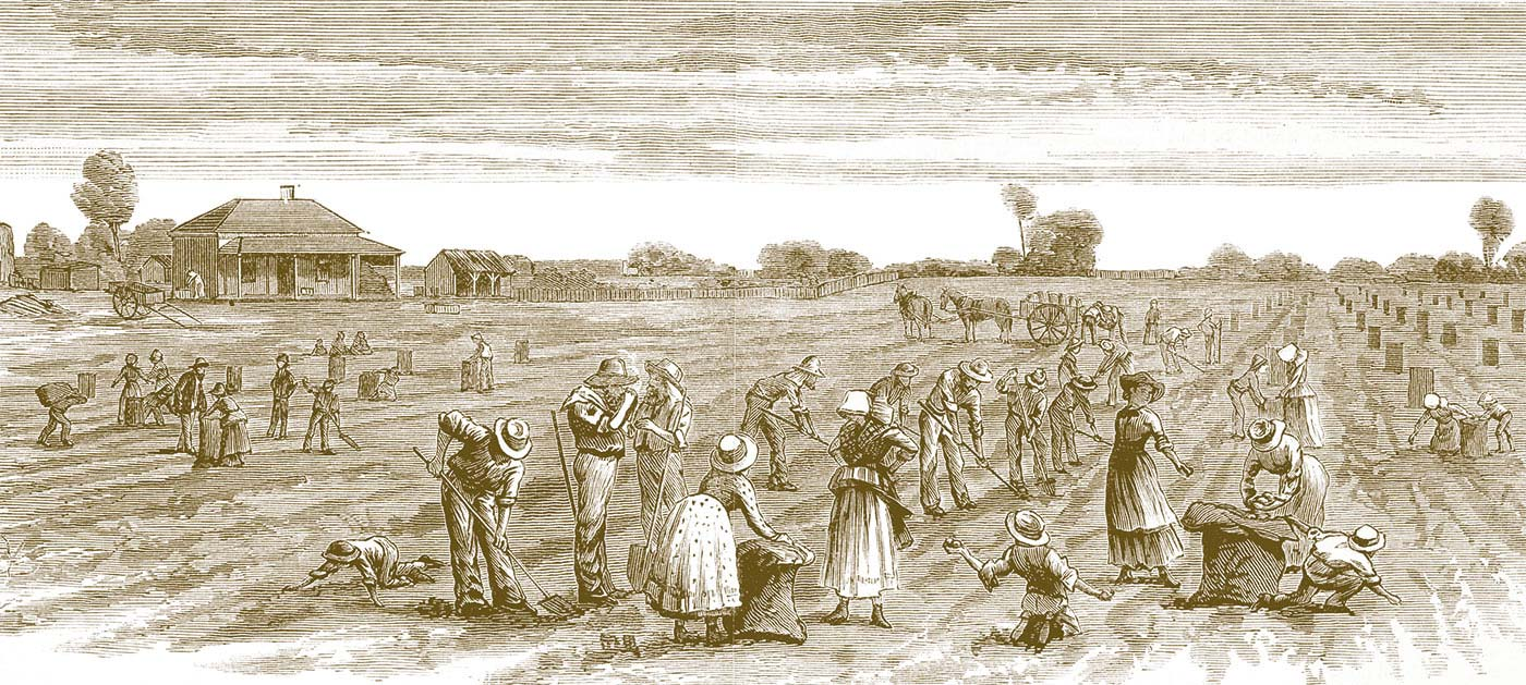 Illustration of a people working in a field.