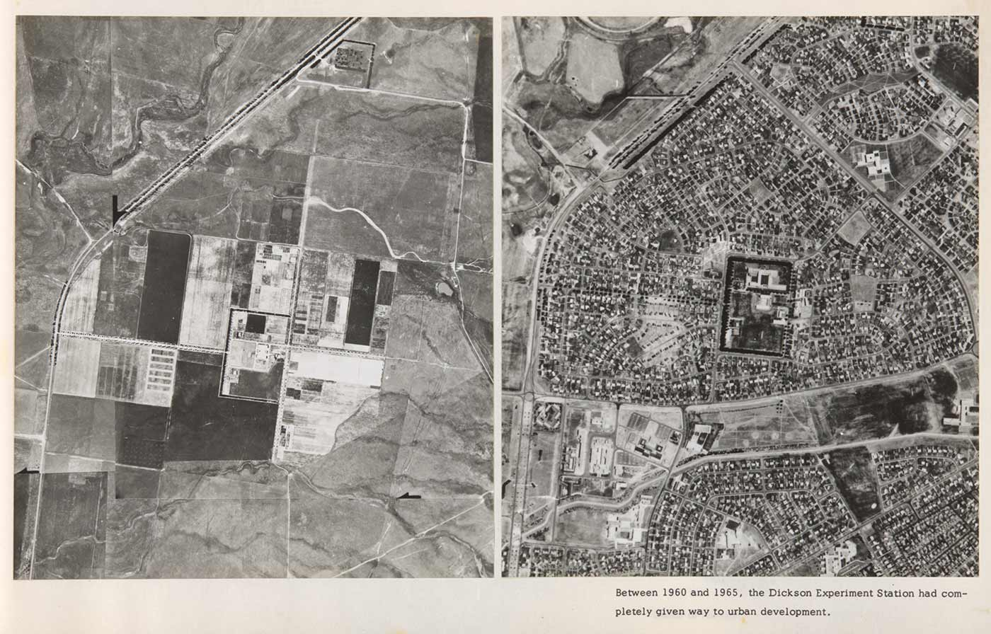 Two black and white photos. The photo on the left shows an aerial view of the undeveloped paddocks of Dickson Experiment Station. The photo on the right shows an aerial view of the suburbs of Downer, Watson and Dickson and has a caption below which reads: 'Between 1960 and 1965, the Dickson Experiment Station, had completely given way to urban development. - click to view larger image