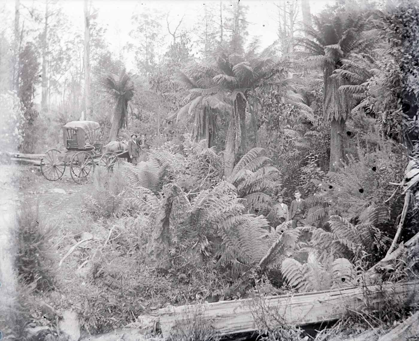 A photographic glass plate negative showing scattered people and a horse-drawn buggy amongst bushland. A man and a woman are visible toward the right side of the image, and a horse-drawn buggy with men beside it can be seen in the background. There are small dots scattered on the right side of the negative. - click to view larger image