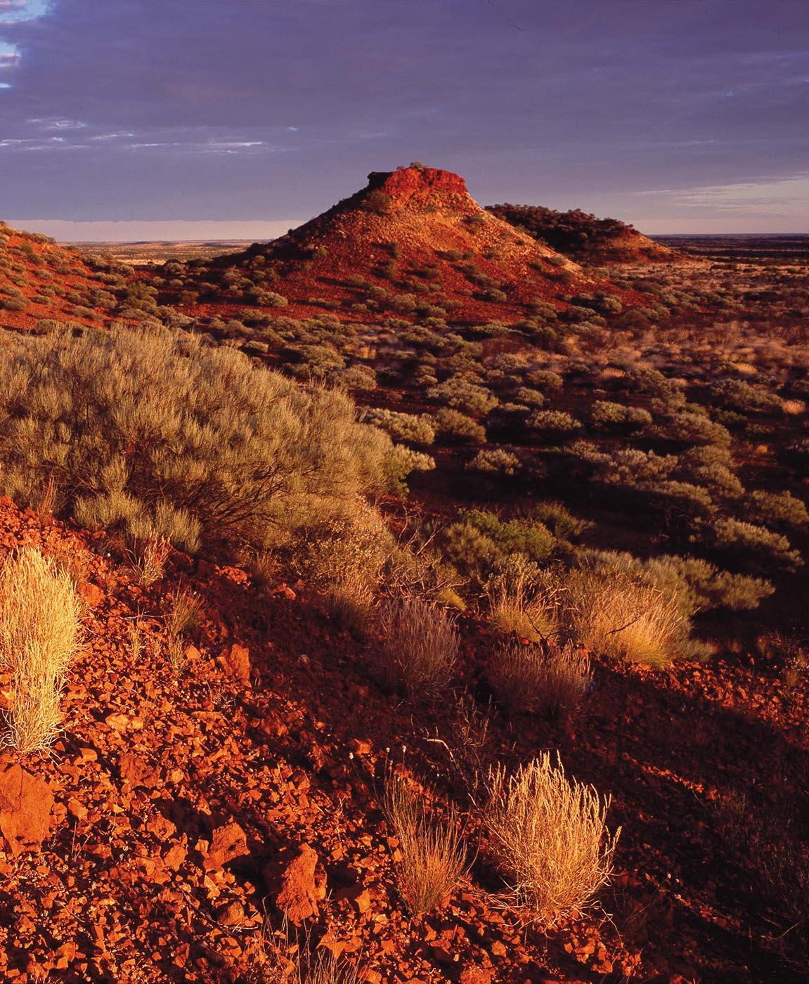 Colour photo of a desert landscape featuring a small hill and scattered plants.