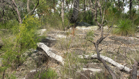 Patch of bushland where axe was found