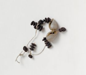Necklace made of small brown oval seeds and white snail shells.