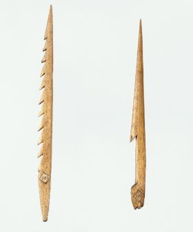 Left image: Harpoon point or fish spear made of possibly whalebone, with ten barbs on one side. Right image:  Also a harpoon point made of whalebone, with only one barb.