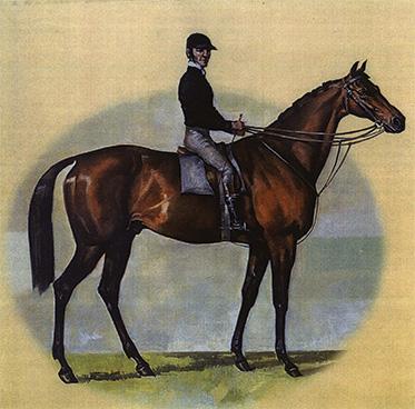 A horse and jockey.