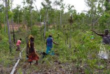 A group of women fossicking through bushland