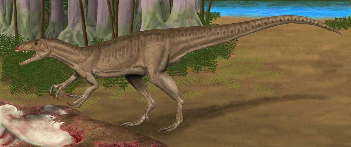 Colour illustration showing a dinosaur with long tail, strong hind legs, small front legs and sharp teeth, feeding on the partially visible carcass of another dinosaur. - click to view larger image