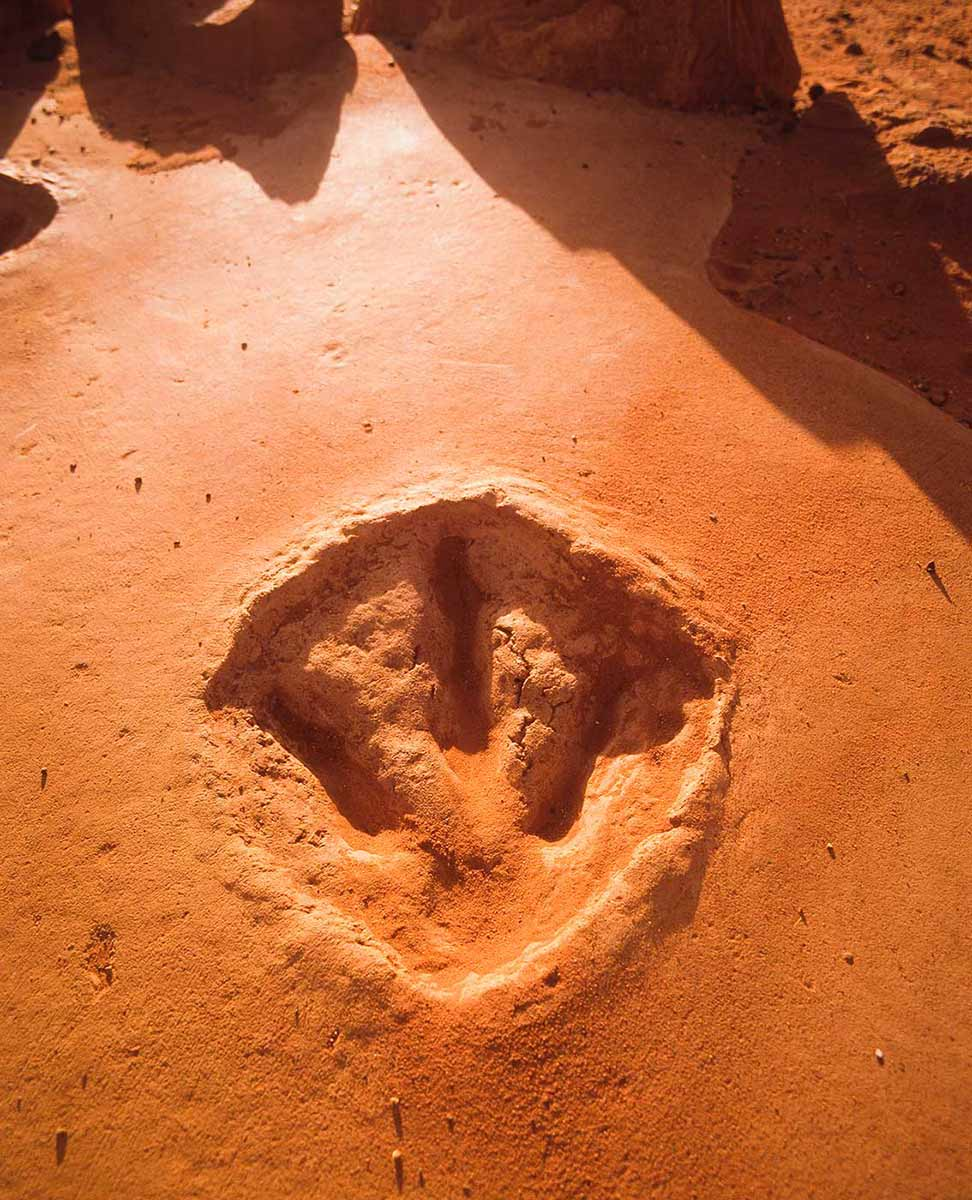 Cast of a three-toed dinosaur footprint in reddish sandy soil. - click to view larger image