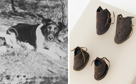 On the left, a photo of a small black and white dog sitting down. On the right, a set of small leather dog boots with eyelets and laces at the rear.