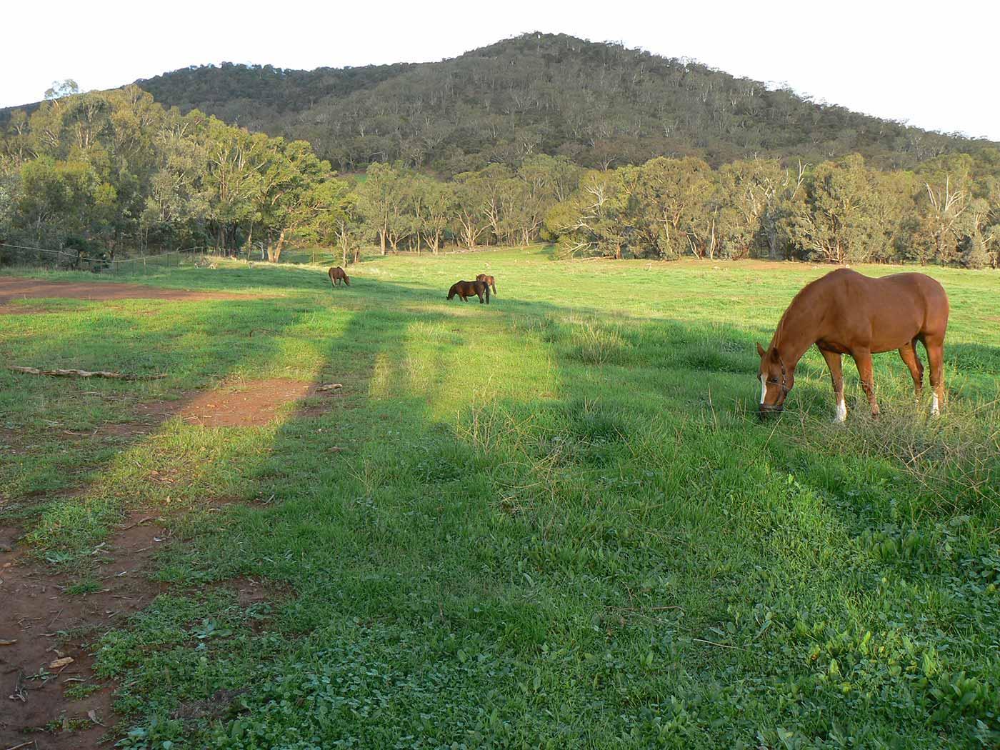 Horses grazing on grassy slopes.