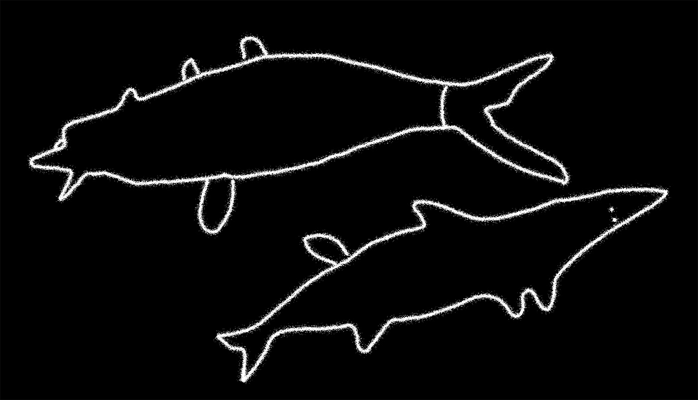 Simple illustrations of two marine species created with white outlines in a rough brush style on a black background. - click to view larger image