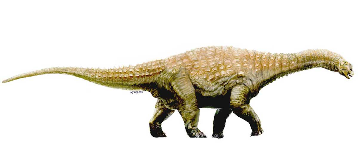 Colour illustration of a large dinosaur with four legs and a long tail and neck. - click to view larger image