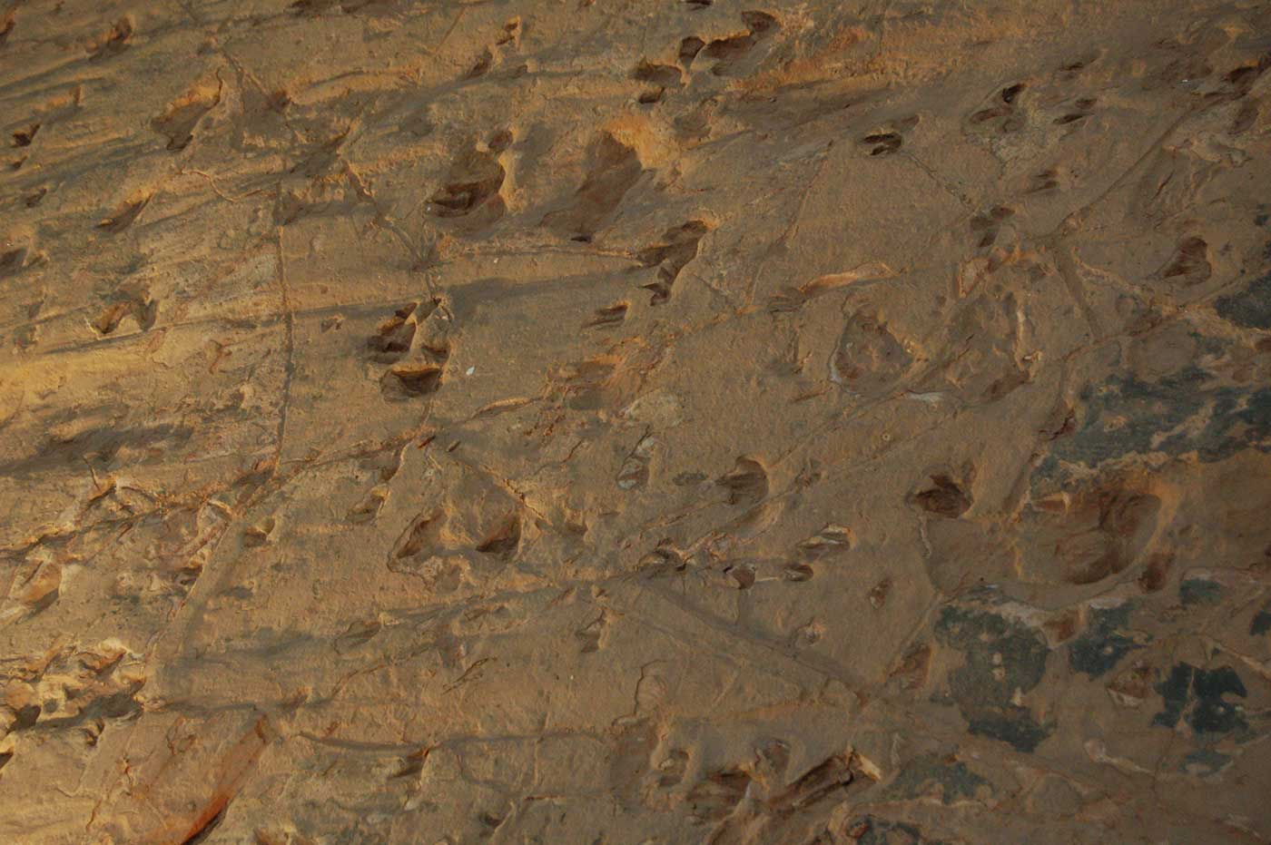 Aerial view of rock indented with various footprints and markings. - click to view larger image