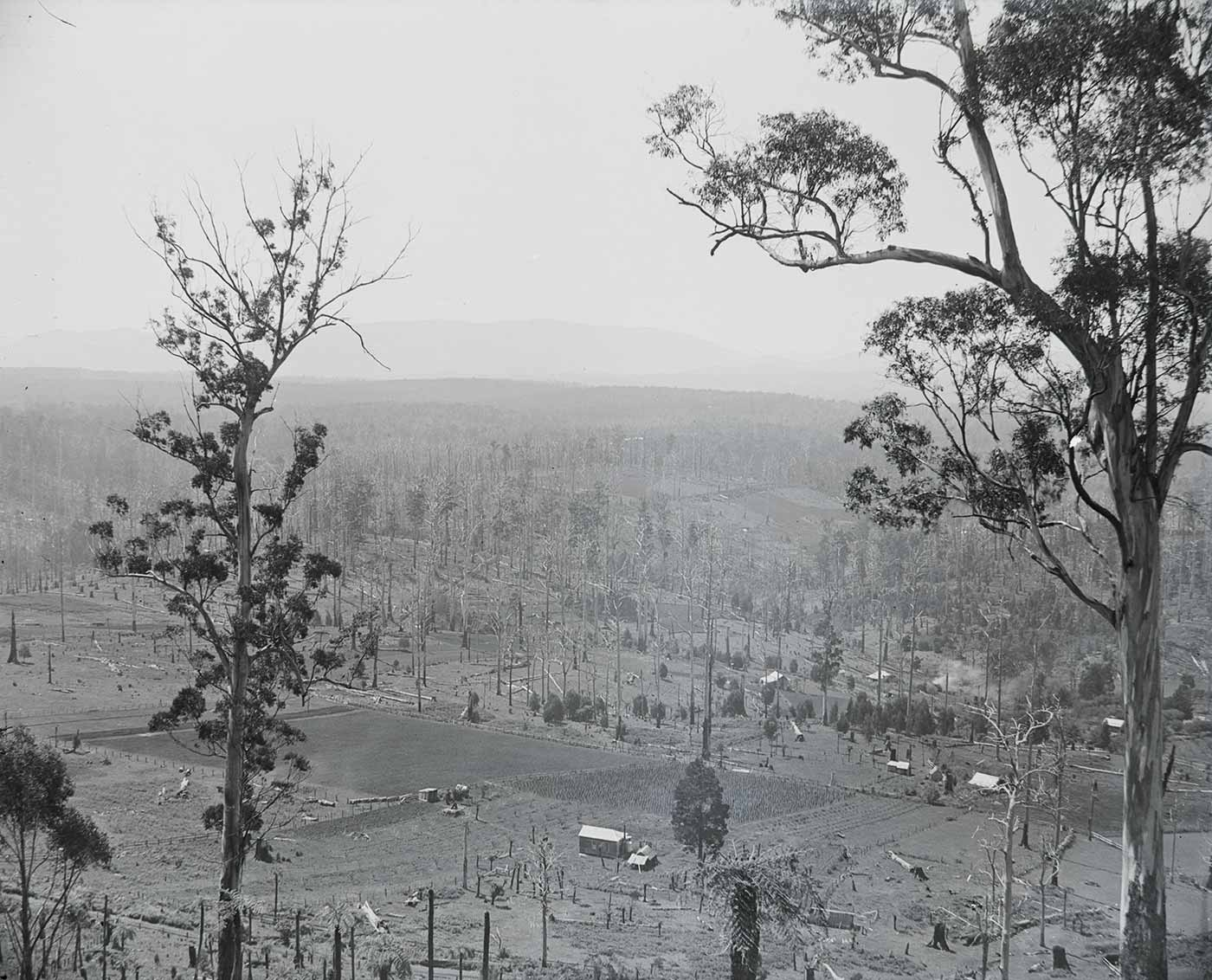 A photographic glass plate negative showing a sceney photographed from a high vantage point, looking down on buildings and open fields. Surrounding the open fields are tall leafless trees. There are two prominent trees in the foreground. There is a slight yellow discolouration near the centre of the image. - click to view larger image