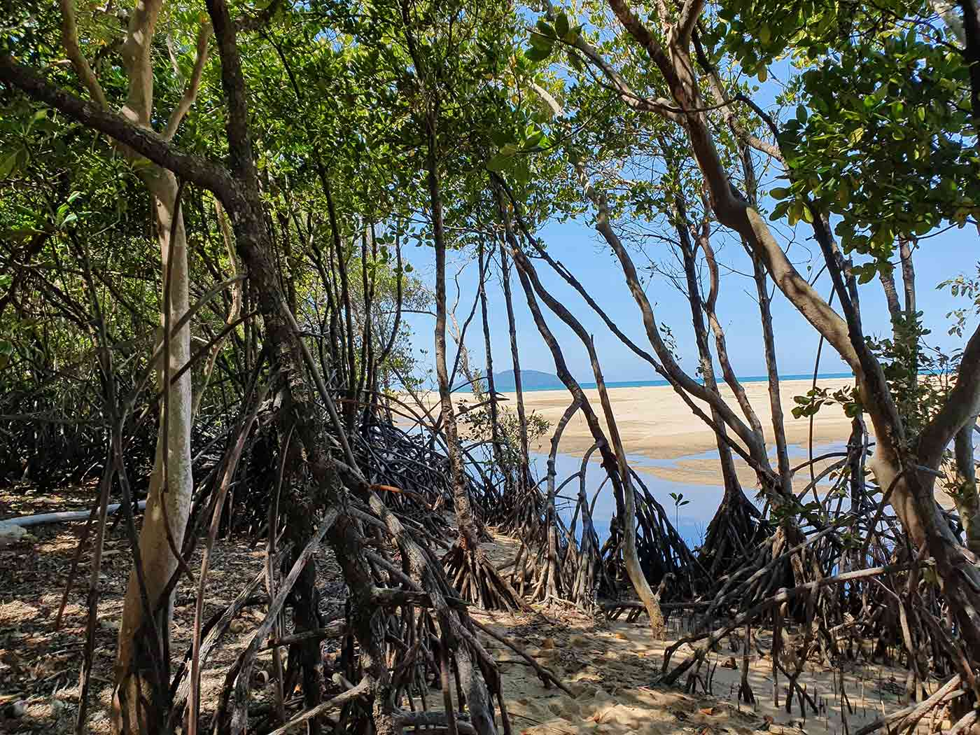 Colour photo of a view from mangrove trees looking out to a beach and ocean with an island in the distance.