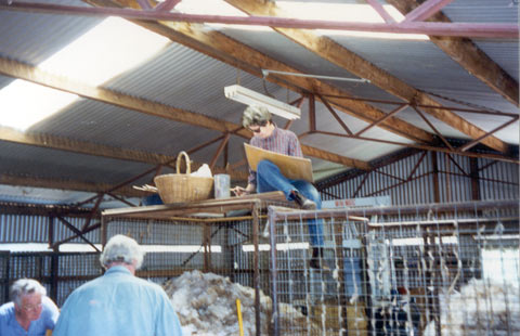A woman sits atop a wire cage, with a board resting on her knees. Below, two people sort wool. The corrugated iron and timber beams of a shed are visible above.