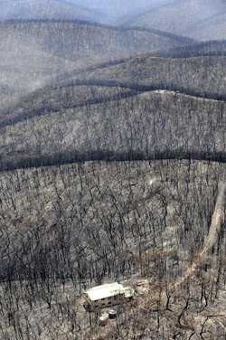 Burnt trees and scorched earth after the fires in Victoria in February 2009. Photo: Craig Abraham/Fairfaxphotos