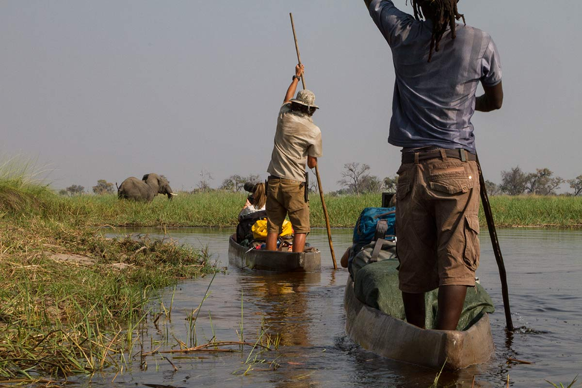 Two men stand at the rear of two open wooden canoes, in water near long grass, where an elephant grazes. The back of a seated person looking into a camera is visible at the front of the lead canoe.  - click to view larger image