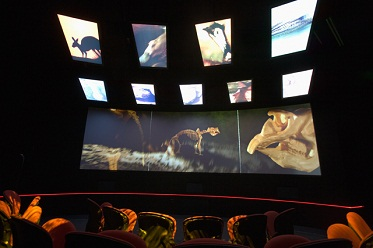 Interior view of a darkened movie theatre showing rear view of several people seated in front of a wide, narrow screen at eye level and nine rectangular screens, arranged in two rows, above. The screens show images including a silhouetted kangaroo, an emu head and the skeleton of a large mammal.
