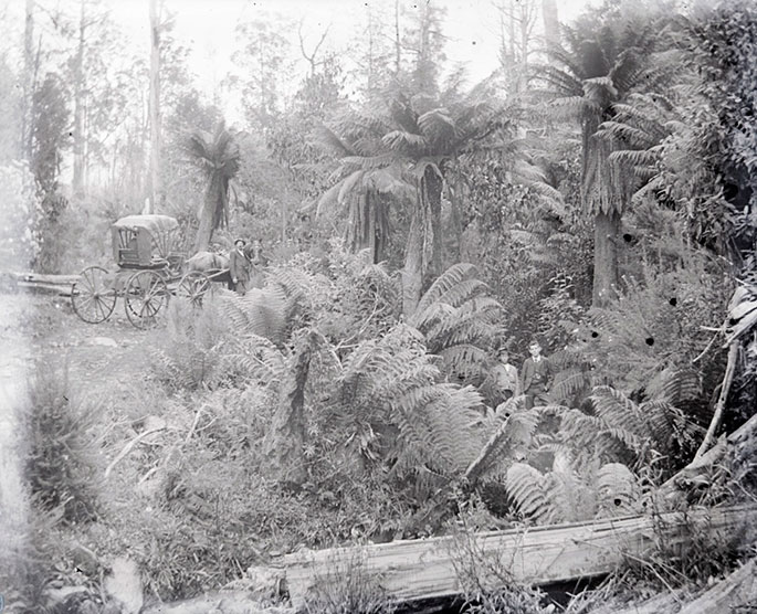 A scenery shot of dense bushland with palm-like trees and ferns. Two people are dwarfed by vegetation at the centre of the image. A man stands with a horse and carriage, in a clearing beside the trees.