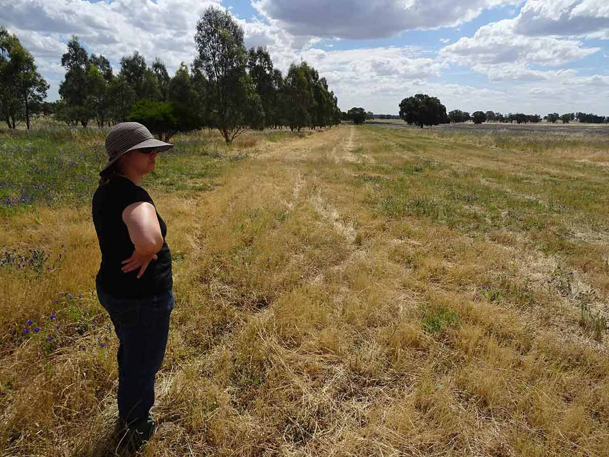 A woman stands in a paddock, with a row of trees on the left.
