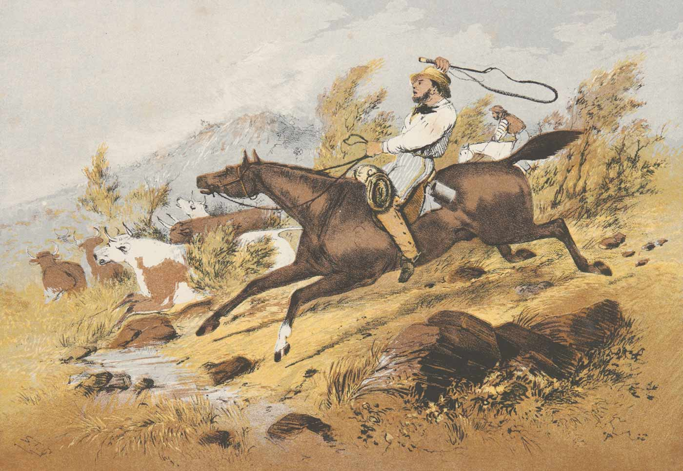 Watercolour image showing a man on horseback chasing cattle through a small creek. - click to view larger image