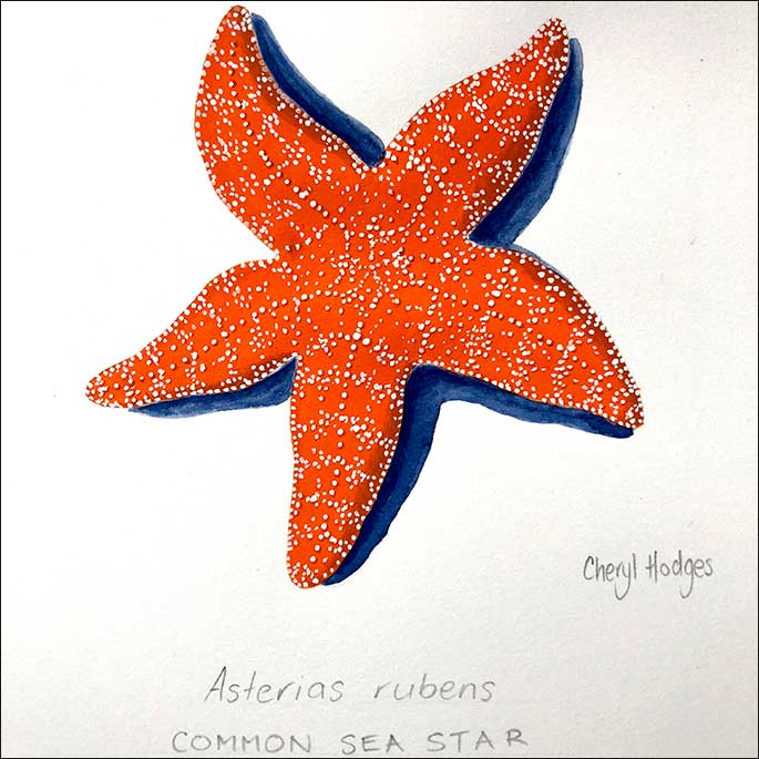a vibrant illustration of an orange coloured starfish with dark blue outline