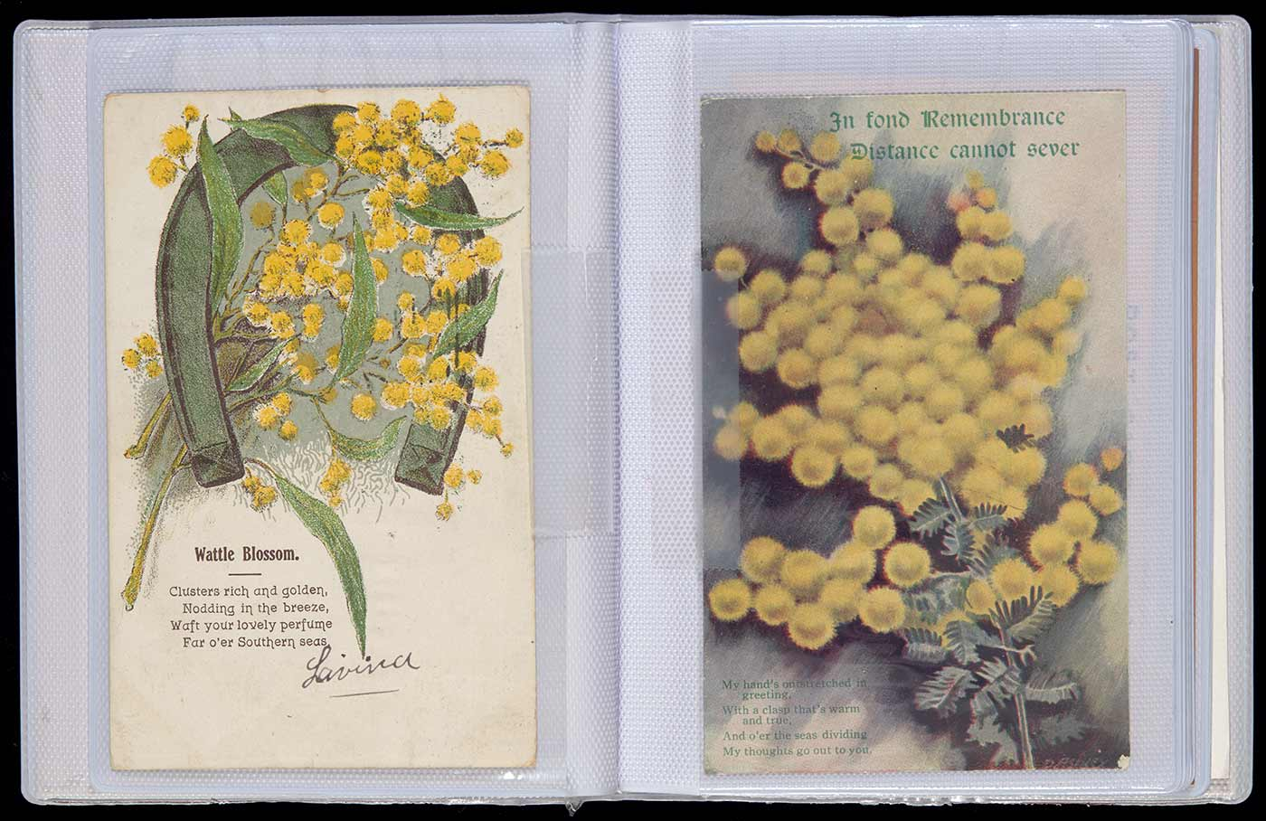 A small plastic photograph album containing cards relating to wattle. Attached to the front cover is a wattle painting on cardboard.
