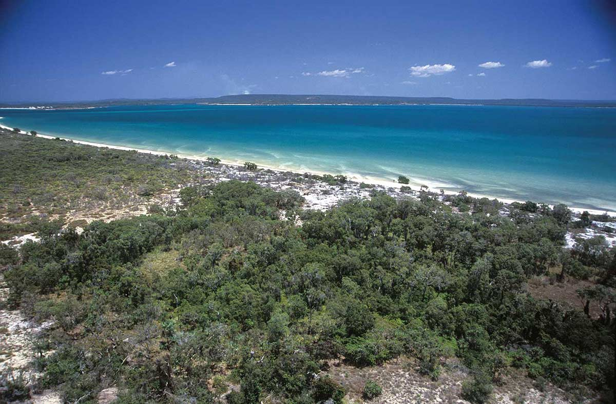 A colour photograph of an area of vegetation near a beach. The vegetation, mostly trees and bushes, is in the foreground. The beach is behind it, running diagonally across the photograph. The white sand of the beach is clearly visible. Beyond the beach is an open expanse of blue ocean. On the horizon is more land. Tufts of cloud are visible in the distance. - click to view larger image