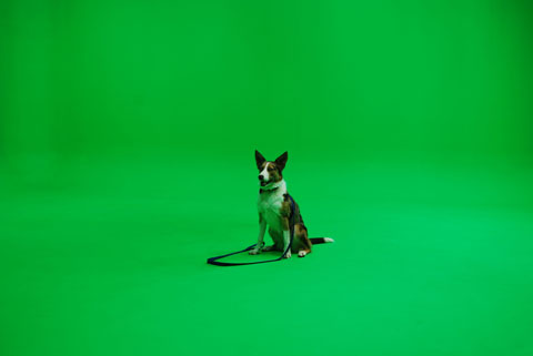 Dash gets familiar with the green screen set.