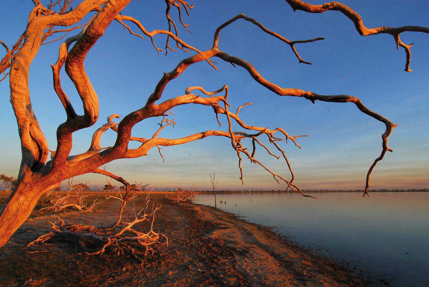 Colour photograph of a landscape featuring a dead tree overlooking a lake.